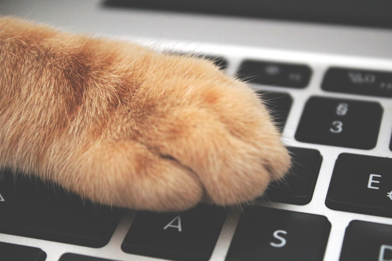 Express-Lieferdienst von QUALIPET hilft auch Tieren gegen Langeweile
